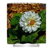White Green Brown Shower Curtain