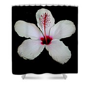 White Hibiscus Isolated On Black Background Shower Curtain