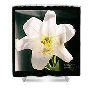 Easter Lily Up Close, Bermuda Shower Curtain