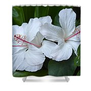 White Hibiscus Trio Waikiki Shower Curtain