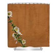 White Hollyhock Against Orange Wall Shower Curtain