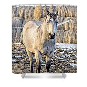 White Horse And Hey Shower Curtain