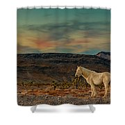White Horse At Sunset Shower Curtain