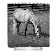 White Horse In A Pasture Among Daisy Flowers Shower Curtain