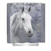 White Horse In Lavender Pasture Shower Curtain
