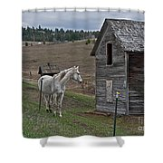 White Horse Near Old Homestead Art Prints Shower Curtain