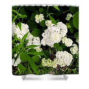 White Hydrangia Beauty Shower Curtain