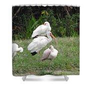 White Ibis Bliss Shower Curtain