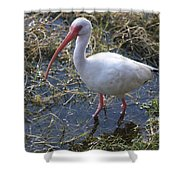 White Ibis In The Swamp Shower Curtain