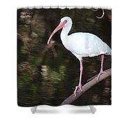 White Ibis On Mangrove Limp Shower Curtain