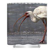 White Ibis On The Beach Shower Curtain