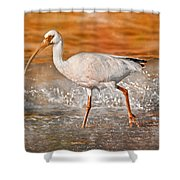 White Ibis Stroll Shower Curtain