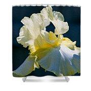 White Iris With Yellow Shower Curtain