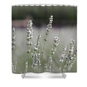 White Lavender Shower Curtain