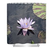 White Light Blue Tiped Waterlily Shower Curtain