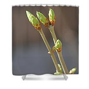 White Lilac Buds Shower Curtain