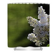 White Lilac Shower Curtain