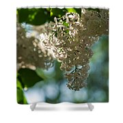 White Lilacs In The Shade - Featured 2 Shower Curtain
