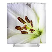 White Lily Close Up Shower Curtain by Garry Gay