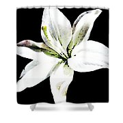 White Lily - Elegant Black And White Floral Art By Sharon Cummings Shower Curtain by Sharon Cummings
