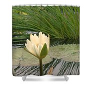 White Lily Near Pond Grass Shower Curtain