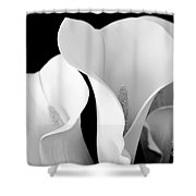 White Lily Trio In Black And White Shower Curtain