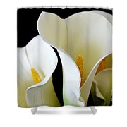 White Lily Trio Shower Curtain