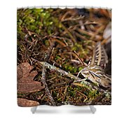 White-lined Sphinx Moth Shower Curtain