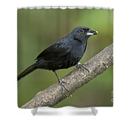 White-lined Tanager Shower Curtain