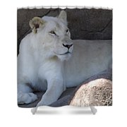 White Lion Looking Proud Shower Curtain
