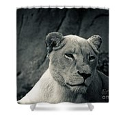 White Lioness Shower Curtain