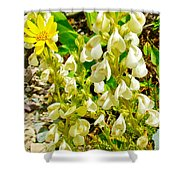 White Locoweed On Highline Trail In Glacier National Park-montana Shower Curtain