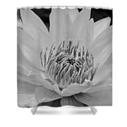 White Lotus 2 Bw Shower Curtain