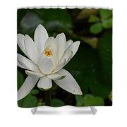 White Lotus Shower Curtain