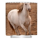 White Mare Approaches Number One Close Up Brighter Shower Curtain