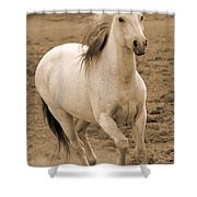 White Mare Approaches Number One Close Up Sepia Shower Curtain