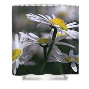 White Marguerite Shower Curtain