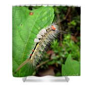 White Marked Tussock Shower Curtain