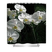 White Moth Orchid Phalaenopsis And Ferns Shower Curtain