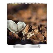 White Mushroom Long Gills Shower Curtain