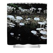 White Mushrooms Amazon Jungle Brazil 1 Shower Curtain