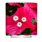 White On Red Trinity Shower Curtain