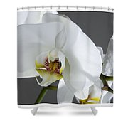 White Orchid 1b Shower Curtain