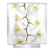 White Orchid-4783 Shower Curtain