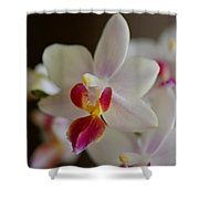 White Orchid Close Shower Curtain