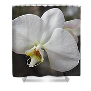 White Orchid Shower Curtain by Elisabeth Witte