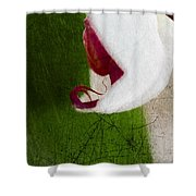 White Orchid Scratched Shower Curtain