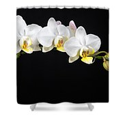 White Orchids Shower Curtain by Adam Romanowicz