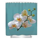White Orchids On Ocean Blue Shower Curtain