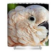 White Parrot Shower Curtain